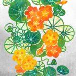 金蓮花(カラー)